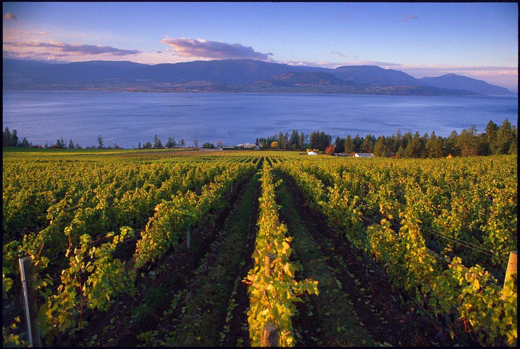 worlds most beautiful vineyards | Cedar Creek Vineyard, Kelowna