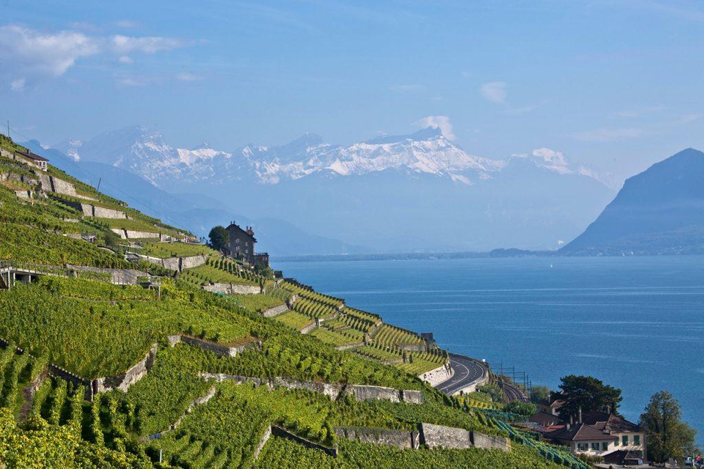 worlds most beautiful vineyards | Louis-Philippe Bovard, Switzerland