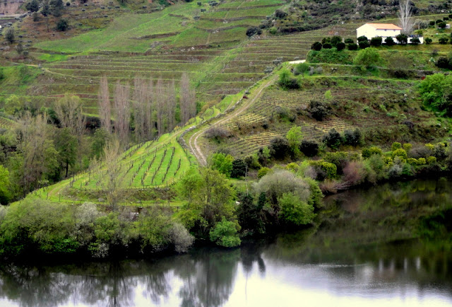 worlds most beautiful vineyards | Douro Valley Vineyards, Portugal